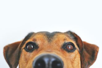 Close up image of IP for Pet Food Manufacturersa brown and tan dog's face and snout