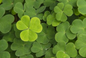 Photo of Shamrocks, a share seen in many U.S. Patents